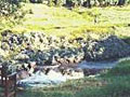 Waimea Gardens Cottage
